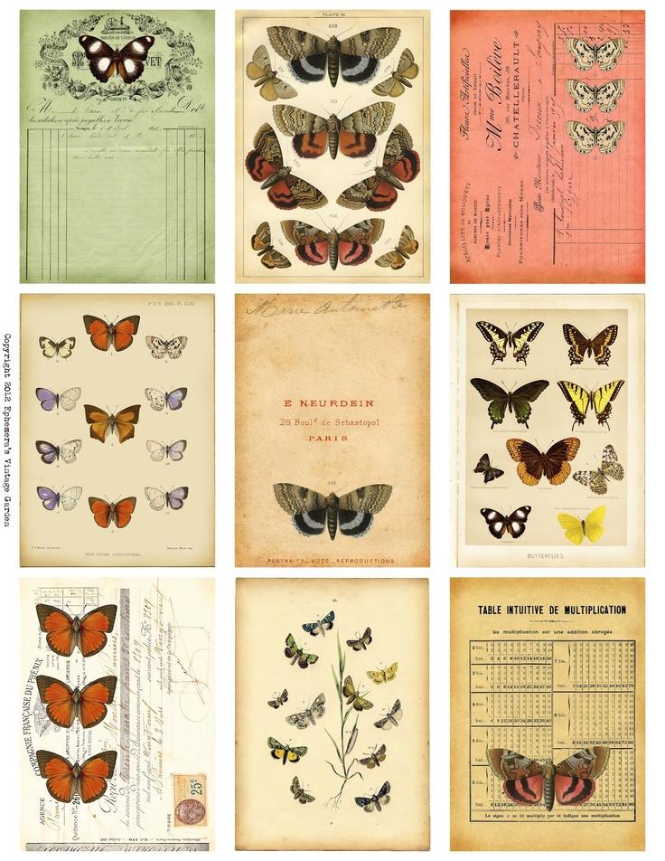 butterflycharts